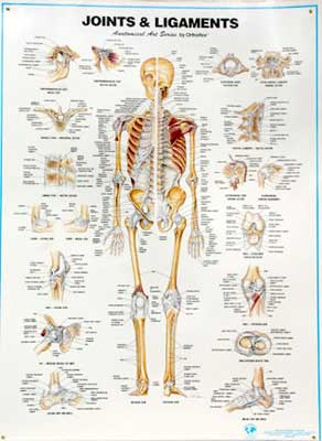 joints & ligaments chart