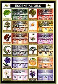 Essential Oils Mini Chart